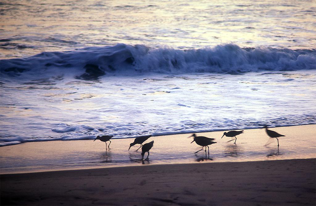 Sandpipers San Elijo