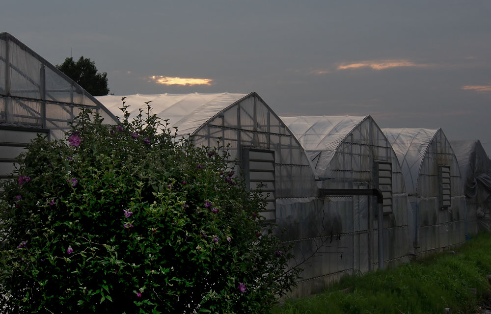 2012/07/14 Naruto Walk Evening Greenhouses