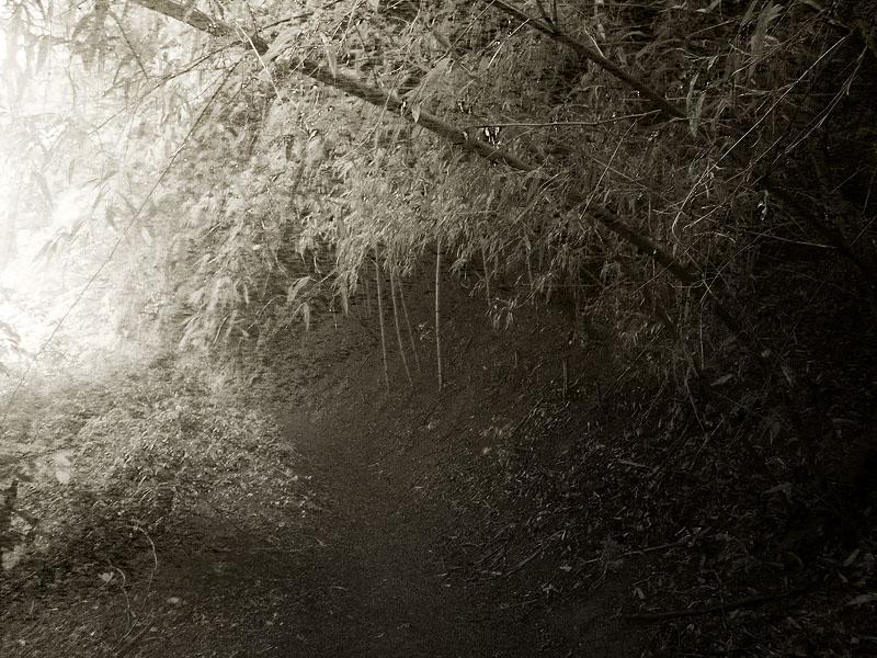 Maruyama Ghost Trail