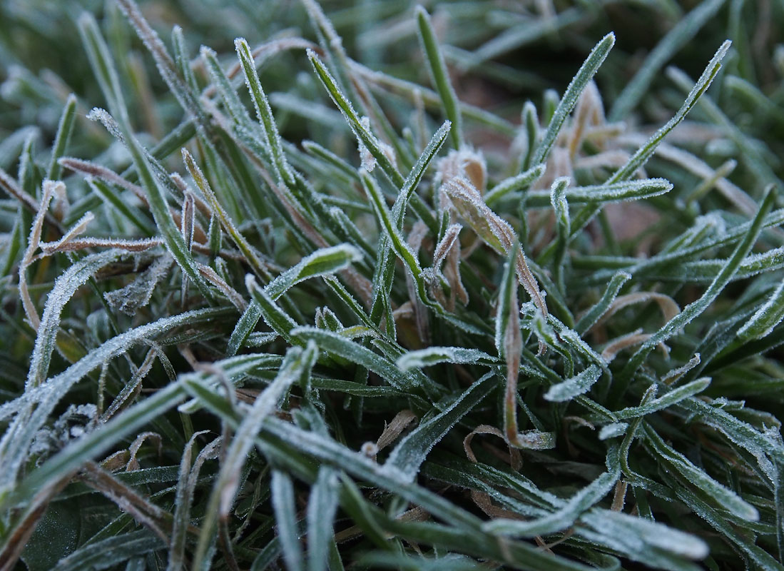 Frosted rounded grass